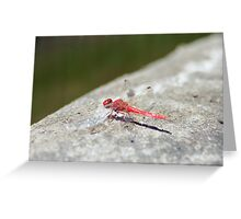 Red Dragon Fly 2 Greeting Card