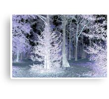 Pink Holly Canvas Print