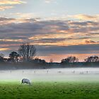 Sheep at Sunset by James  Key