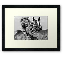 BRETONS  Framed Print