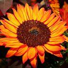 Sunflower by Ryan Nowell