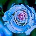 BlueRose by Don Stott