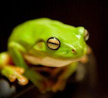 Green Tree Frog by PhotoBull