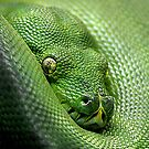 Not Easy Being Green by Lance Leopold