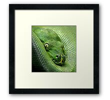 Not Easy Being Green Framed Print