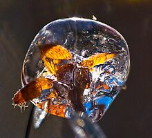 Backyard Icicle (11) ! by robkal