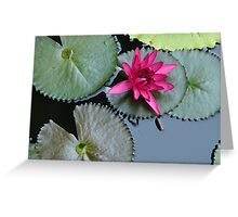 from water... Greeting Card