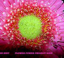 BEAUTIFUL IN PINK by DarrellMoseley