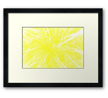 Root or Branch v 09 : Photography by Alys Griffiths Framed Print