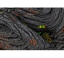 Telopea Truncata Photographic Print