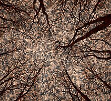 Root or Branch v 14 : Photography by Alys Griffiths. by sigriff