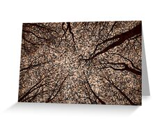 Root or Branch v 14 : Photography by Alys Griffiths. Greeting Card