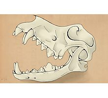 Ancient Canine Skull Photographic Print