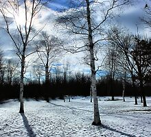 Winter Wonderland Beginning (Part 1) by shellyb