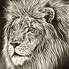 ACEO Lion I by John Houle