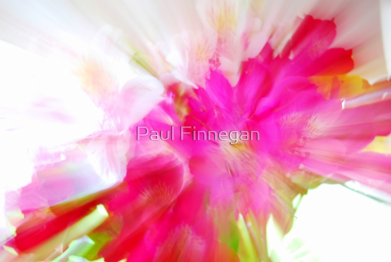 Explosion of Pink by Paul Finnegan