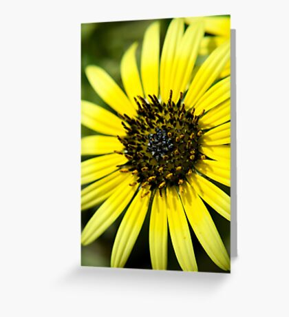 Sun Kissed Petals Greeting Card