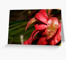 Red Leather Greeting Card