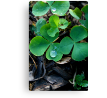 One Leaf Short Of Luck Canvas Print