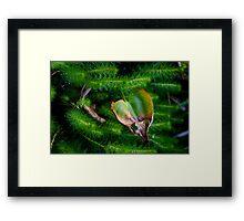 Natures Heart Framed Print