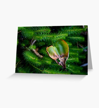 Natures Heart Greeting Card