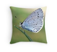 Holly Blue Butterfly Throw Pillow