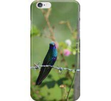Sparkling Violetear Hummingbird on a Fence iPhone Case/Skin
