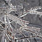 KC Ice Storm '07 by Jelderkc