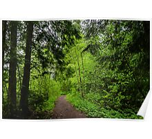 Country path  Poster