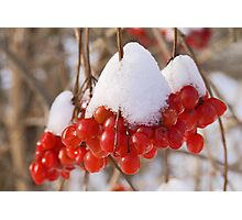 Christmas Berries Photographic Print