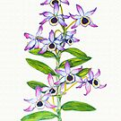 The Noble Orchid - Dendrobium nobile by Sue Abonyi