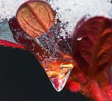 Frozen Azalia Swirl ! by robkal