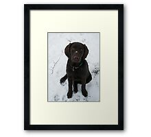 Snowy Lab Framed Print