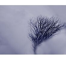 Shrouded Photographic Print