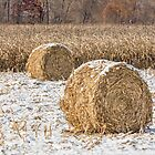 Snowy Cornstalk Bales by Kenneth Keifer