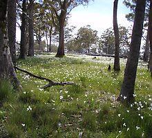 carpets of bush flowers near Fossey River, Tasmania by gaylene