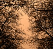 sunset and branches Sticker