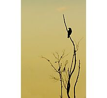 Afternoon Solitude Photographic Print
