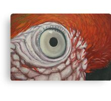 detail of Red Macaw Canvas Print