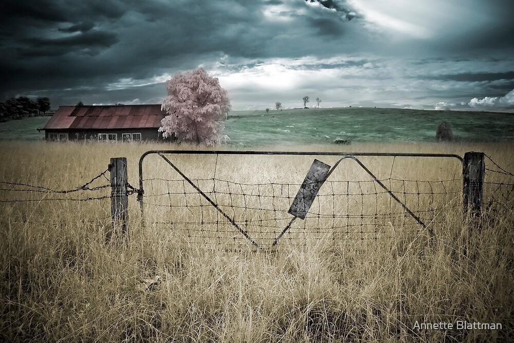 Beware of Dogs by Annette Blattman