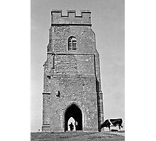 Bovine Tourists Photographic Print