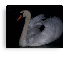 Swan in the dark Canvas Print