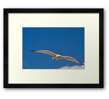 White Bird Against Blue Sky Framed Print