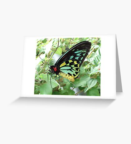 Mama Butterfly Greeting Card