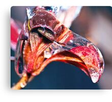 Camel Icicle ! Canvas Print