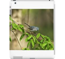 Blue-gray Gnatcatcher iPad Case/Skin