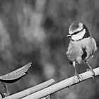 Re series published since the first time too bright ... !! 12  (n&b)(t) Birds by Olao-Olavia / Okaio Créations fz 1000 by Okaio - caillaud olivier