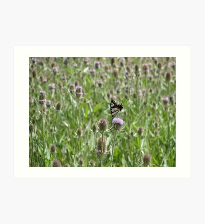 Thistle Butterfly Art Print