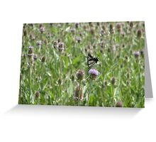 Thistle Butterfly Greeting Card