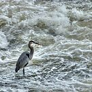 Fishing in the St James River by vivsworld